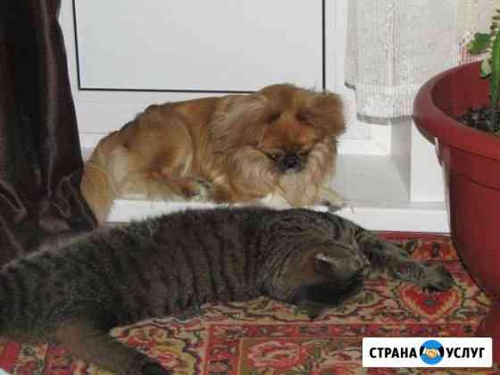 Передержка собак Балаково
