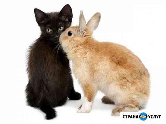 Передержка мелких животных Благовещенск