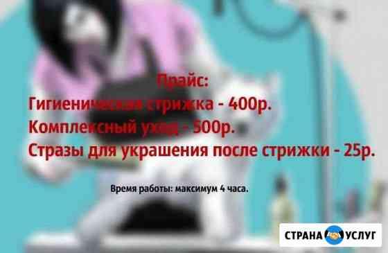 Грумер. стрижка собак В великом новгороде Великий Новгород