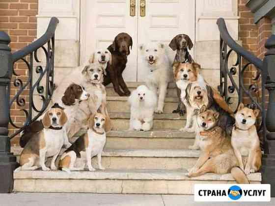 Гостиница для собак Ульяновск