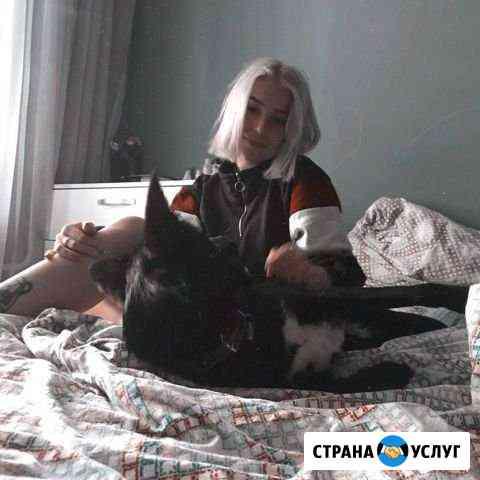 Передержка животных/ собак/ кошек/ догситтер Казань