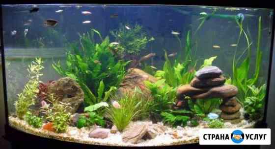 Обслуживание и чистка аквариумов по Туле и области Тула