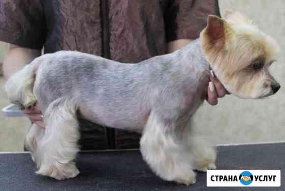 Cтрижка собак и кошек Иваново