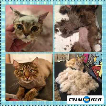 Стрижка, мытьё и вычес кошек без наркоза Самара
