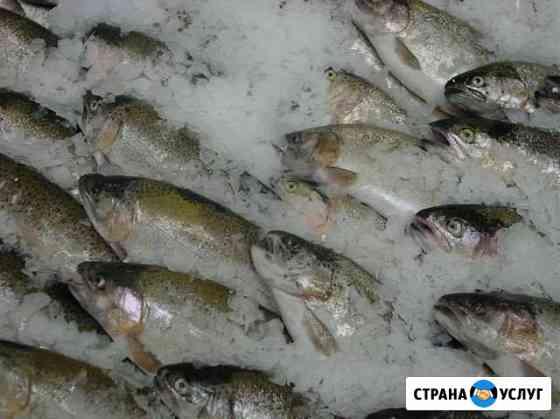 Переработка, разделка, упаковка рыбы Петрозаводск
