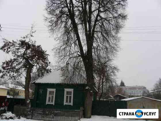 Спилим, кронируем дерево Рославль