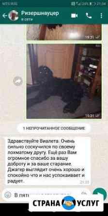 Передержка и дрессировка собак Владимир