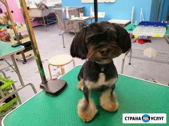 Стрижка собак и кошек Челябинск