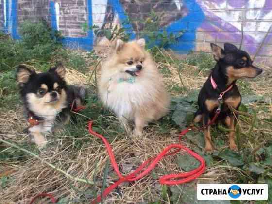 Передержка животных Краснодар