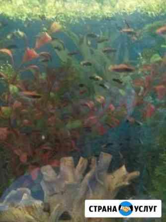 Запуск и обслуживание аквариума Томск