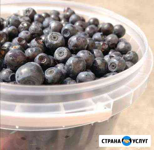 Черника Соликамск