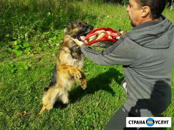 Профессиональная дрессировка собак Северодвинск
