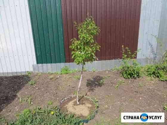 Обрезка деревьев на дачных участках Пенза