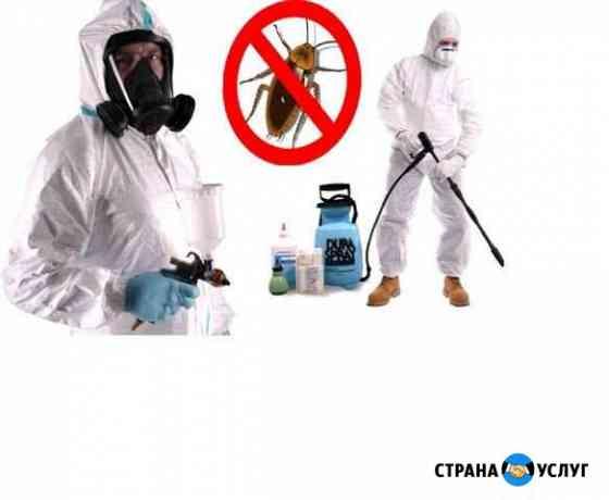 Уничтожение насекомых грызунов запахов Ижевск