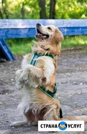 Дрессировка собак. Зоопсихолог. Защитный курс Нижний Новгород