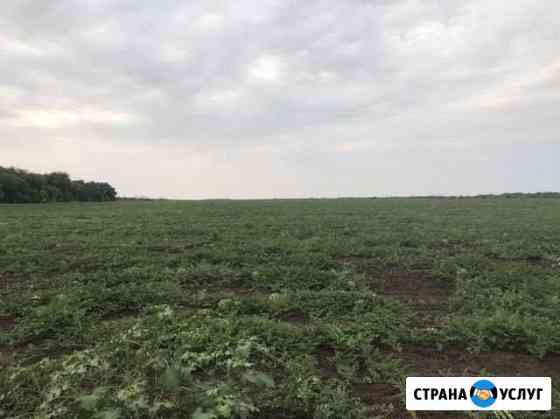 Арбуз Николаевск