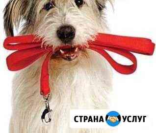 Выгул собак Тольятти
