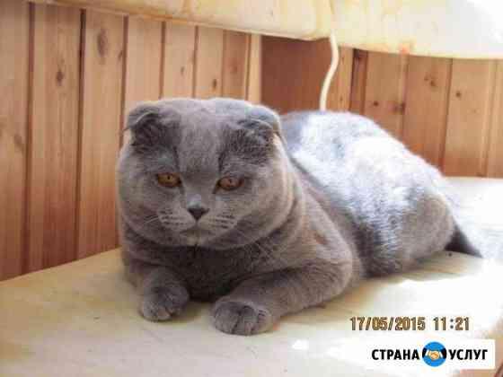 Кот на вязку Кыштым