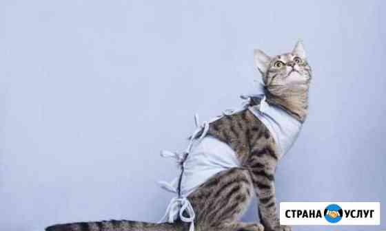 Стерилизация кошек, кастрация котов Калуга