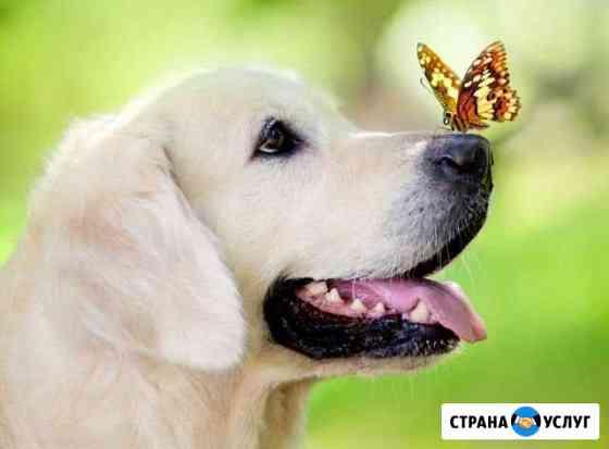 Коррекция поведения вашей собаки.Социализация Иваново
