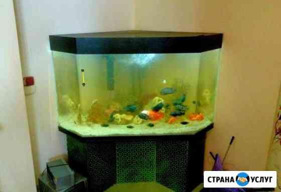 Обслуживание аквариумов. Аквариумист Иваново