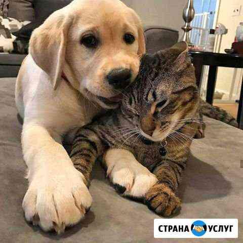 Передержка животных Челябинск