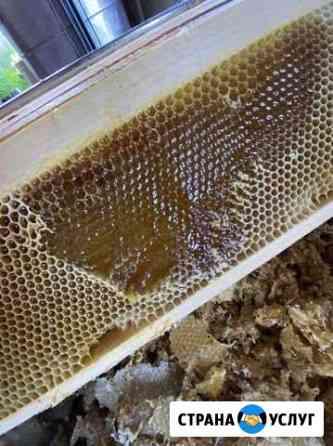 Мёд в сотах Барнаул