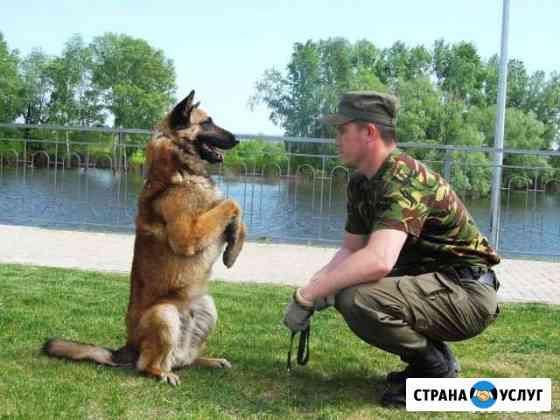 Дрессировка собак Тюмень