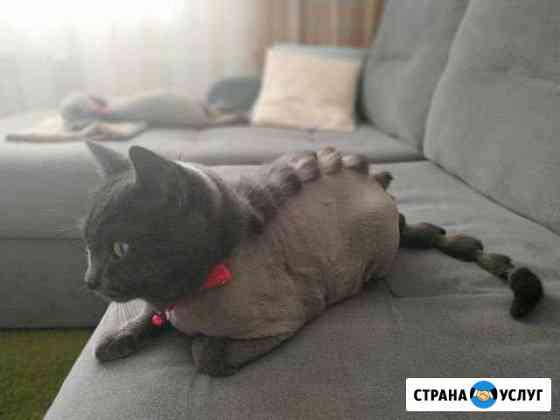 Стрижка кошек с выездом на дом Омск