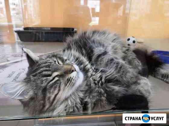 Зоогостиница для кошек и собак Краснодар