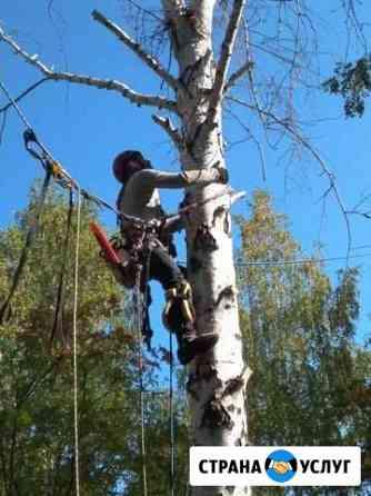 Спил деревьев любой сложности Пенза