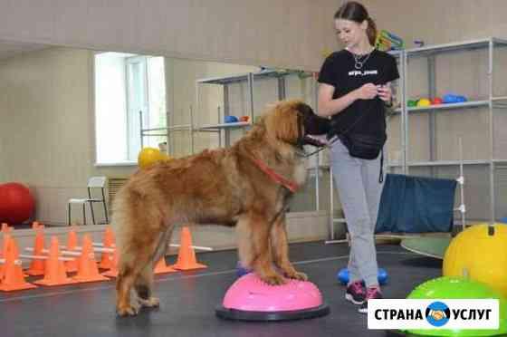 Реабилитация собак и фитнес Хабаровск
