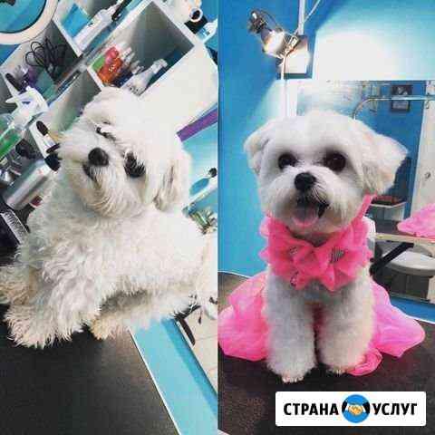 Стрижка кошек и собак. Зоогостиница Барнаул