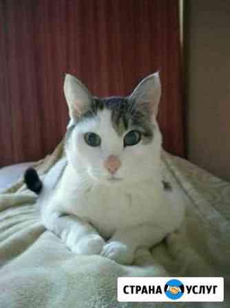 Передержка котов и кошек Красноярск
