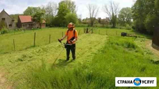 Покос травы, стрижка газона, борьба с вредителями Калининград