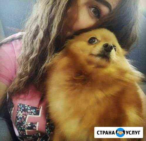 Передержка собак (хостел для питомца) Волгоград