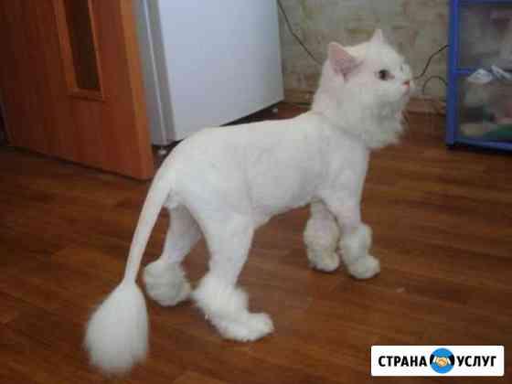 Стрижка кошек и котов. Выезд на дом Новосибирск