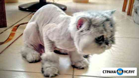 Груминг/Стрижка собак и кошек/Арамиль/Кольцово/Хим Большой Исток