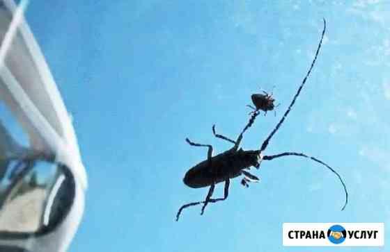 Уничтожение короедов, блох, крыс, тараканов клопов Калининград
