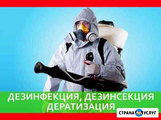 Уничтожение клопов тараканов муравьёв крыс Ульяновск