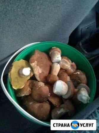 Белые грибы Павлово