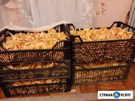 Грибы лисички Великий Новгород