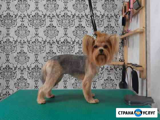 Стрижка собак и кошек Груминг Иваново
