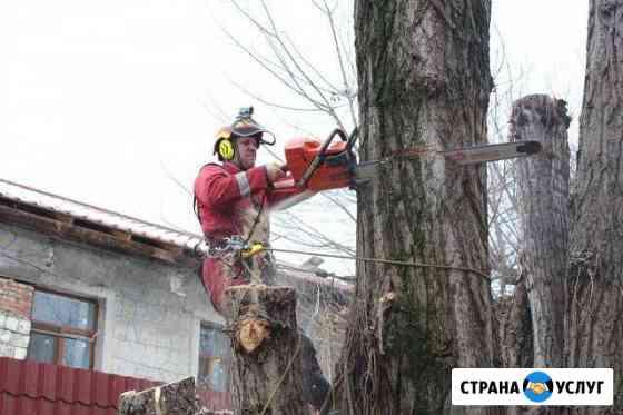 Спил деревьев в Симферополе Симферополь