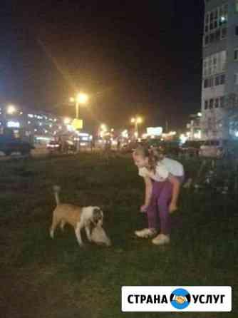 Выгул собак Челябинск