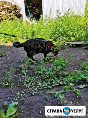 Передержка для кошек Челябинск