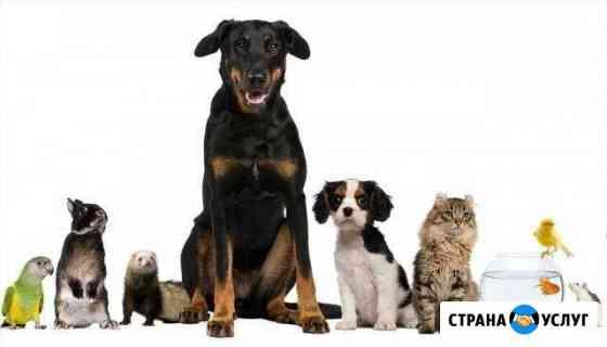 Профессиональная передержка домашних животных Самара