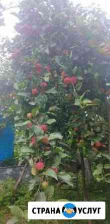 Свежевыжатый яблочный сок Барнаул