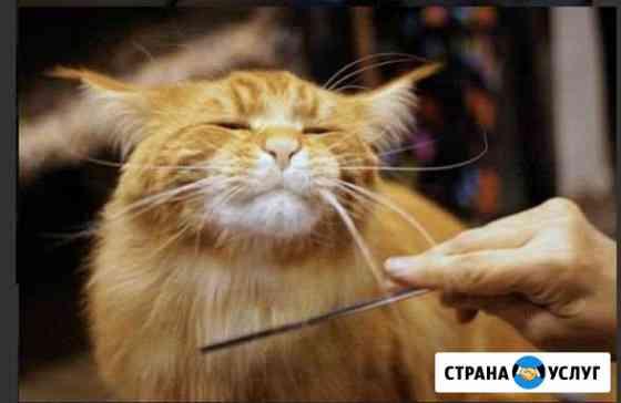 Стрижка собак и кошек Волгоград