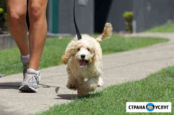 Выгул собак и кошек Кемерово